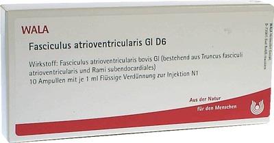 FASCICULUS atrioventricularis GL D 6 Ampullen