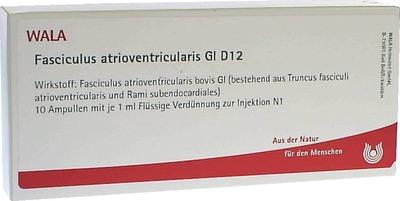 FASCICULUS atrioventricularis GL D 12 Ampullen