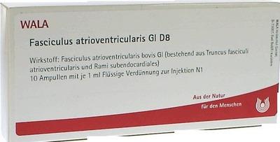 FASCICULUS atrioventricularis GL D 8 Ampullen